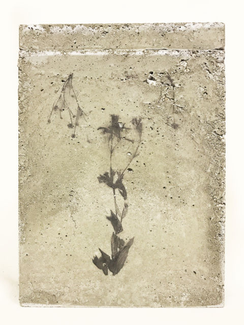 TINKEBELL, Flower collage in a box of concrete with aceton print , Something Pretty That Can Do No Harm 2, 2017