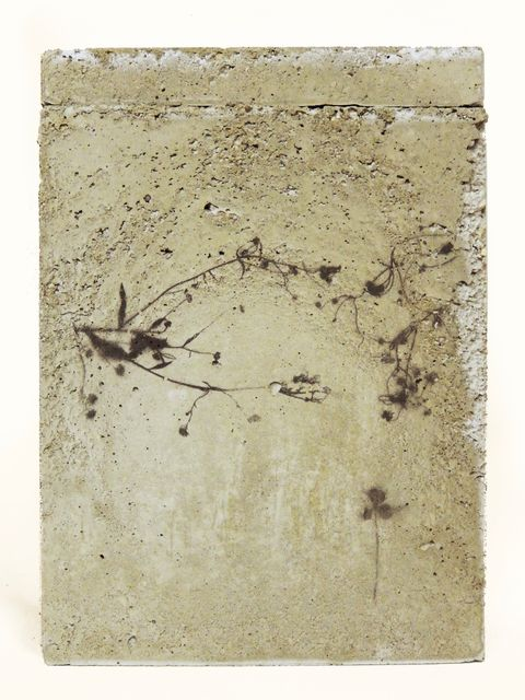 TINKEBELL, Flower Collage In A Box Of Concrete With Aceton Print, SOMETHING PRETTY THAT CAN DO NO HARM 3, 2017